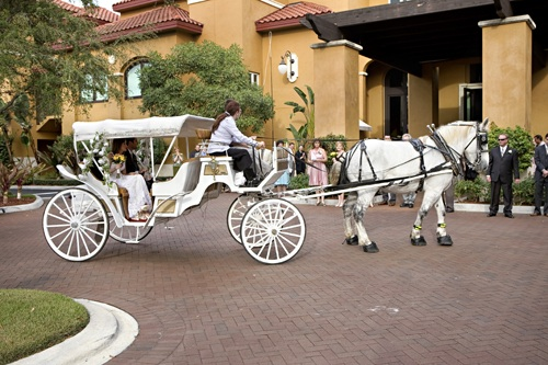 Horse and Carriage Wedding Photography