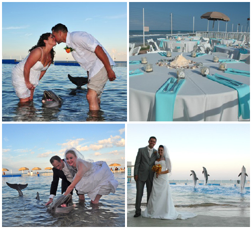 dolphin weddings Photo credit Marineland