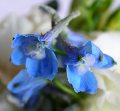 Blue Wedding Flower Guide