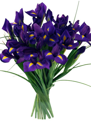 purple wedding iris