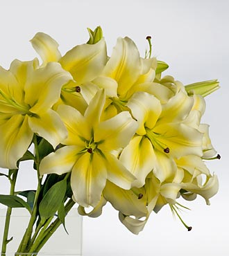 yellow wedding lilies