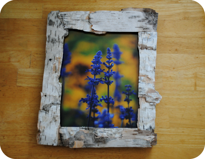 diy birch bark frame