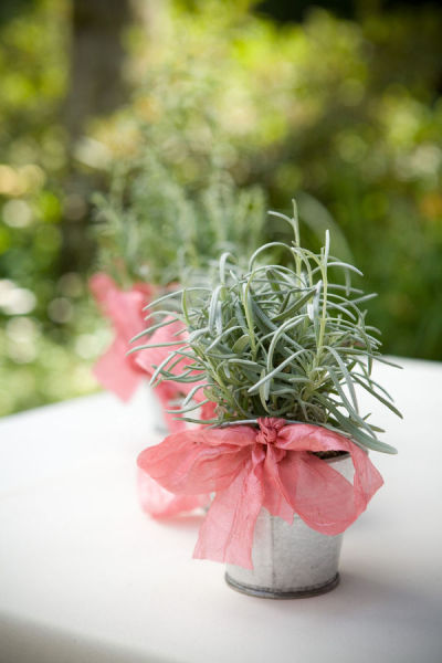 potted wedding favors