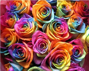 dyed roses