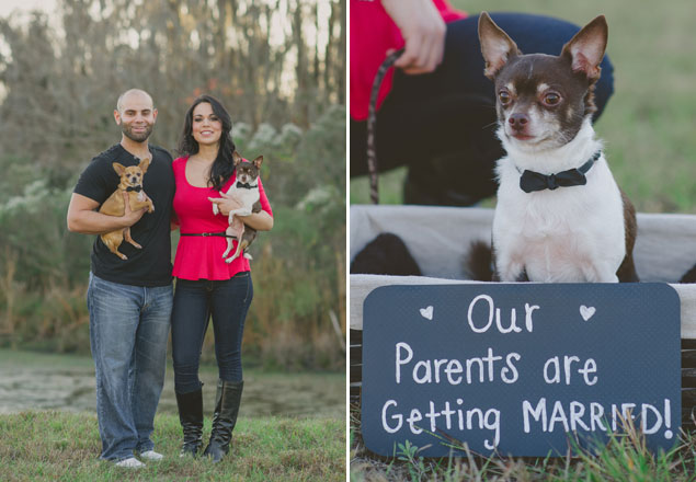 Dogs in Engagement Shoot