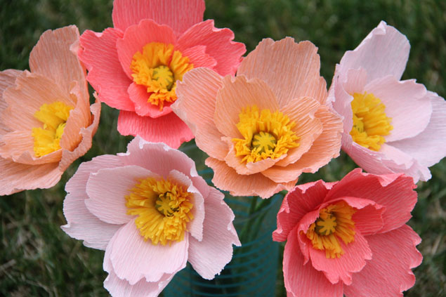 Iceland Poppy Flower From Flower Bazaar